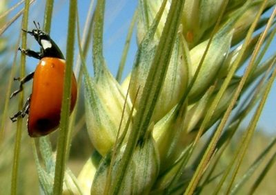 biodiversità-e1563755239713